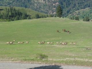 elk-horses